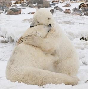 bear hug 3